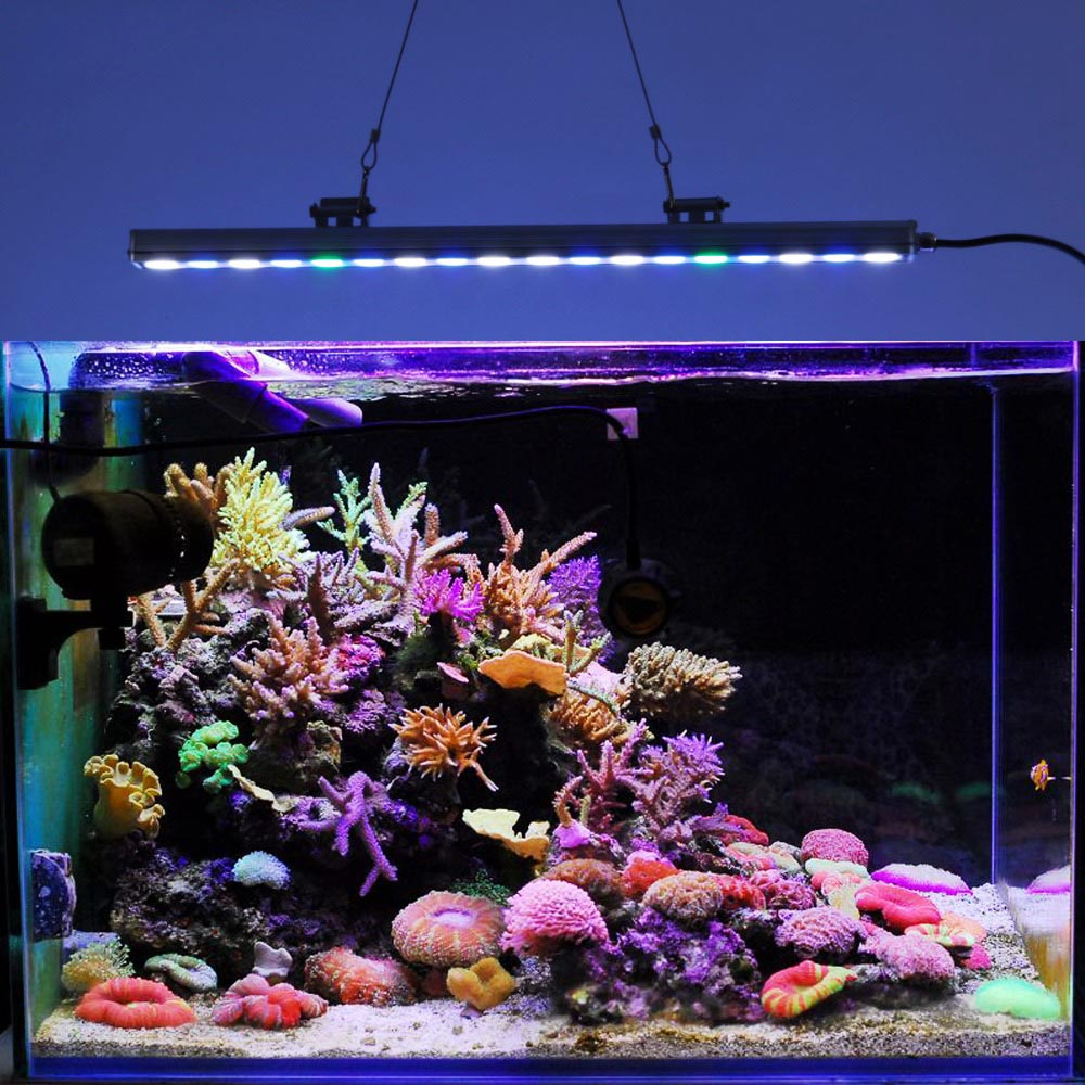 Freshwater aquarium coral reef aquarium design ideas for Reef tank fish