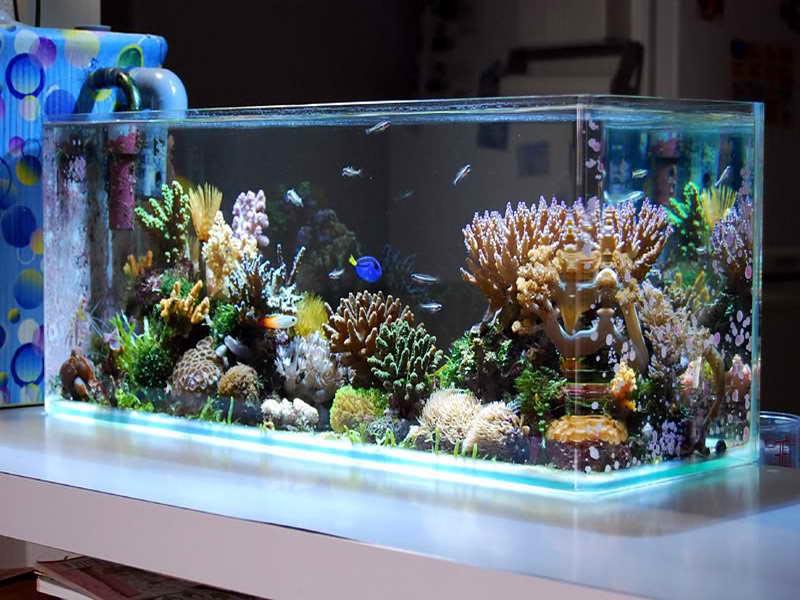 Freshwater Aquarium Salt Water Theme