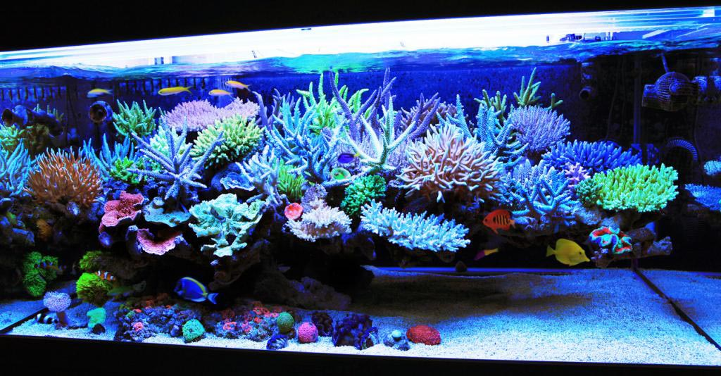 Freshwater aquarium setup with live plants aquarium for Freshwater fish tank setup