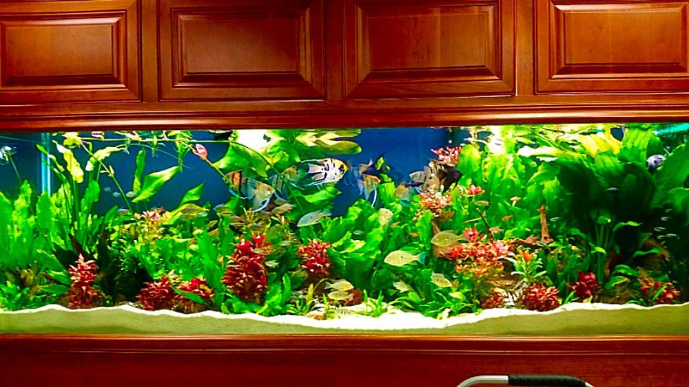 Freshwater Aquarium with Live Plants