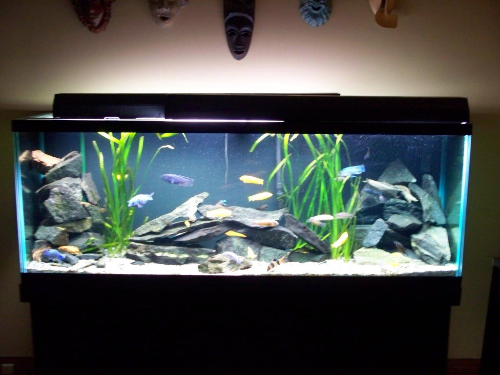 freshwater fish aquarium decorations - Freshwater Aquarium Design Ideas