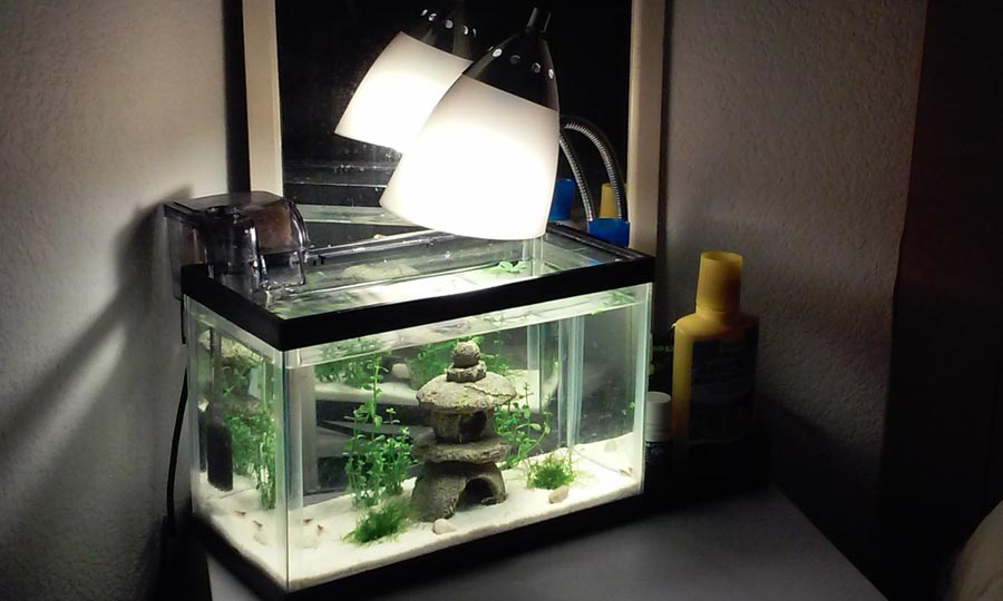 Freshwater Fish Small Aquariums