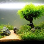 Freshwater Live Plant Aquarium Setup