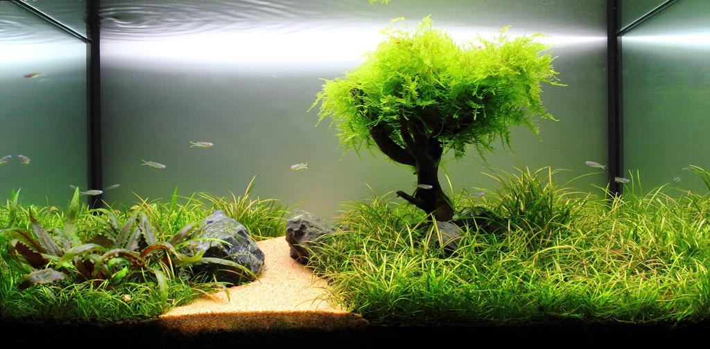 Freshwater live plant aquarium setup aquarium design ideas for Aquarium pour poisson rouge