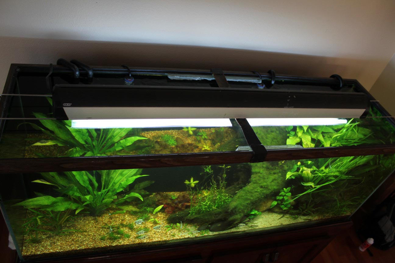 Glass Canopy for Aquarium
