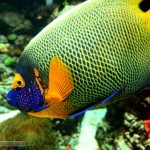 Great Saltwater Aquarium Fish