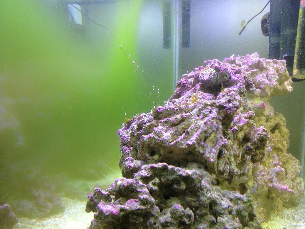 Green Algae Aquarium Glass
