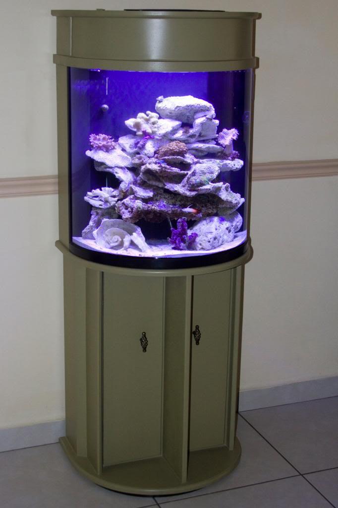 Half moon aquarium 30 gallon aquarium design ideas for 30 gallon long fish tank
