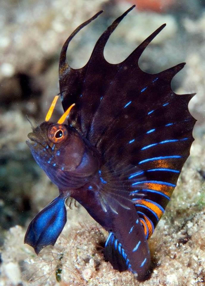 Hardy saltwater aquarium fish aquarium design ideas for Saltwater aquarium fish for sale