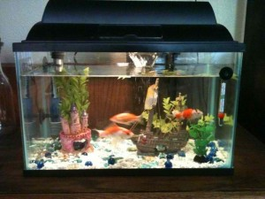 How Much Aquarium Salt Per Gallon for Brackish Water