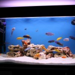 How to Keep Fish Aquarium Cool