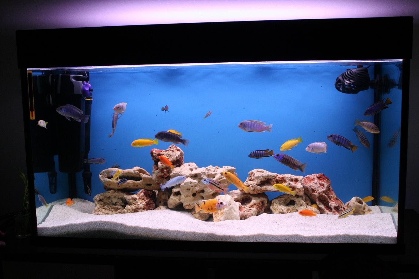 How to make fish aquarium decor aquarium design ideas for How to decorate fish tank