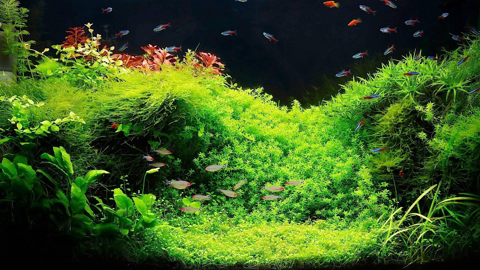 How to Setup a Freshwater Aquarium with Live Plants