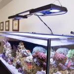 Hydrogen Peroxide Salt Water Aquarium