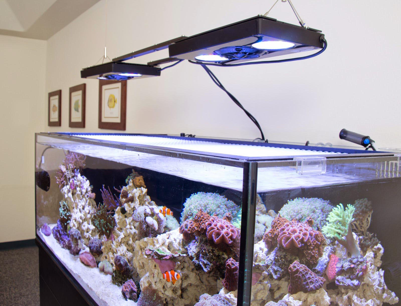 Hydrogen Peroxide Salt Water Aquarium