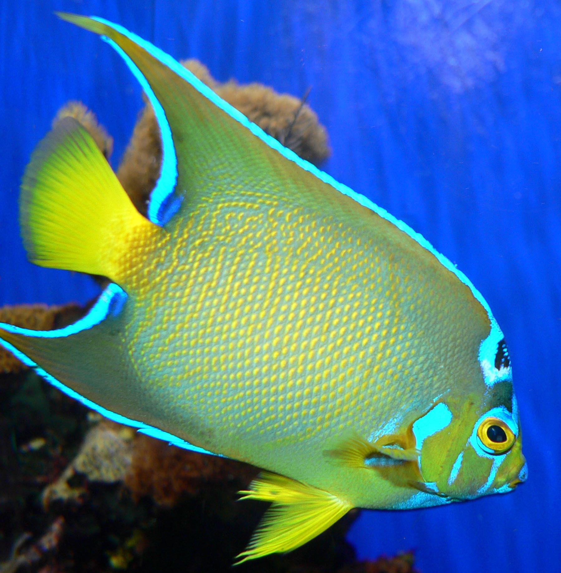 Kinds of Aquarium Fish