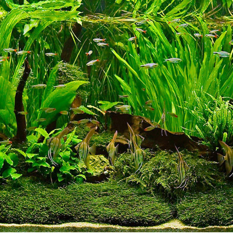 Large Live Aquarium Plants