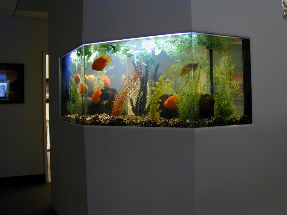 Large Luxury Wall Mounted Aquarium
