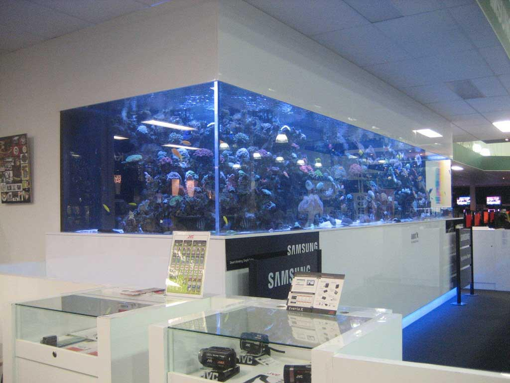 Large Wall Mounted Aquarium