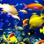 List of Cool Water Aquarium Fish