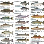 List of Freshwater Aquarium Fish