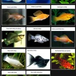 List of Saltwater Aquarium Fish