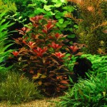 Live Aquarium Plants for Beginners
