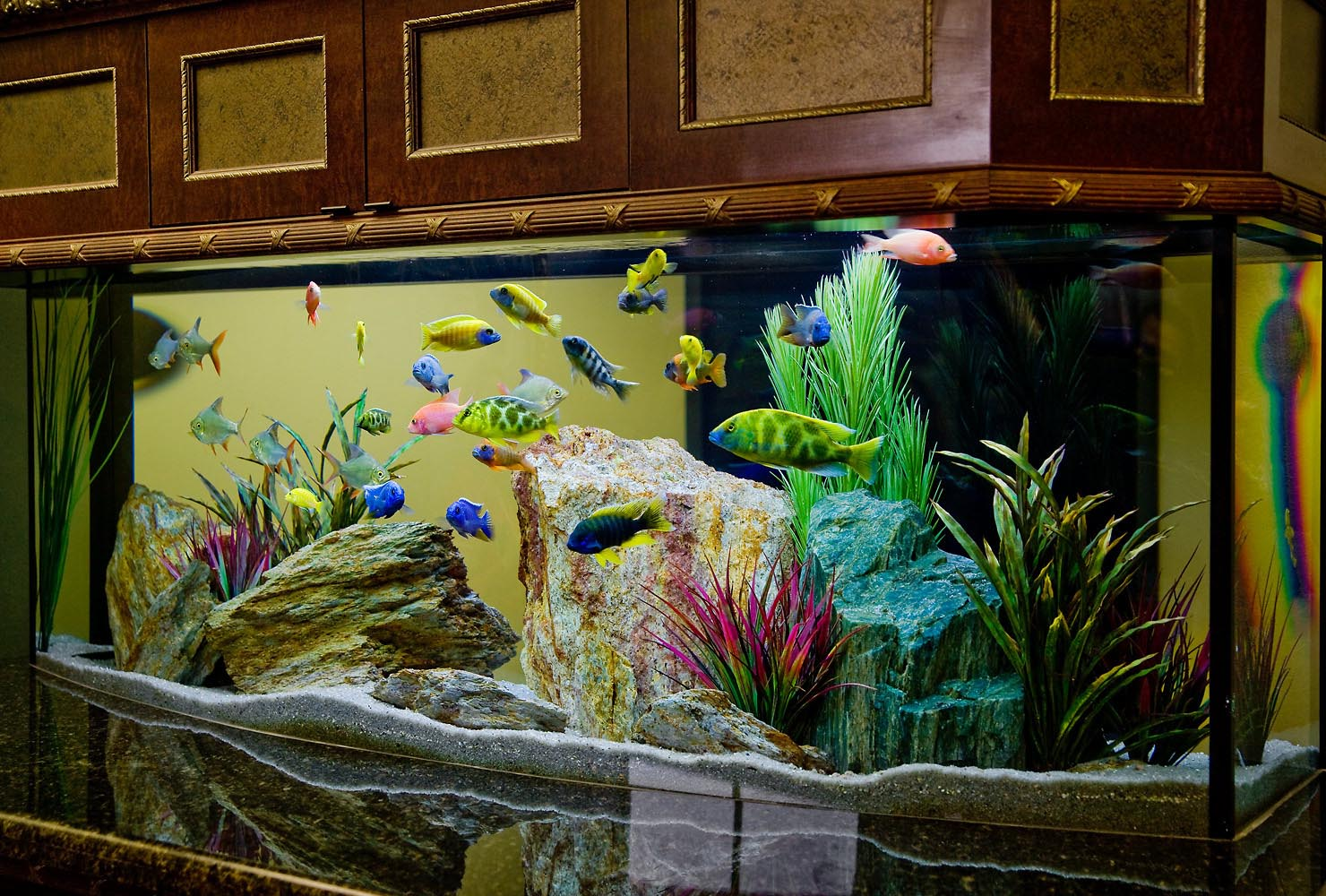 Most Colorful Freshwater Aquarium Fish | Aquarium Design Ideas