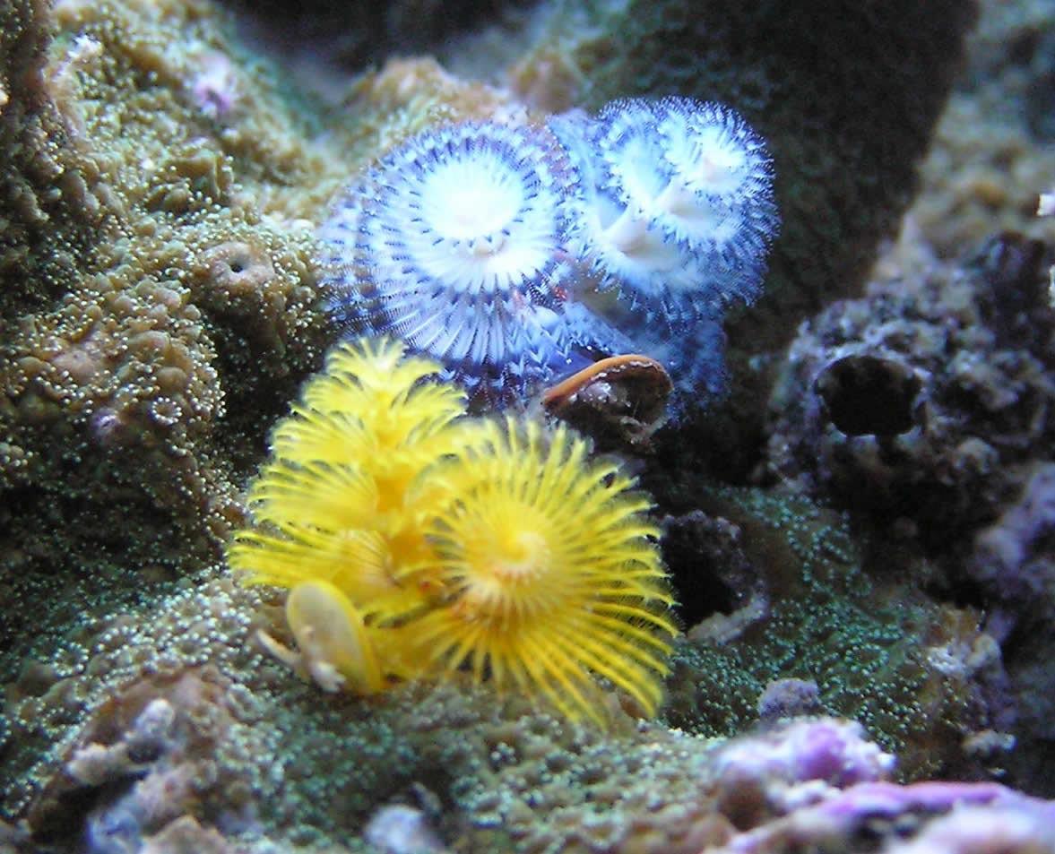 Live Marine Aquarium Fish