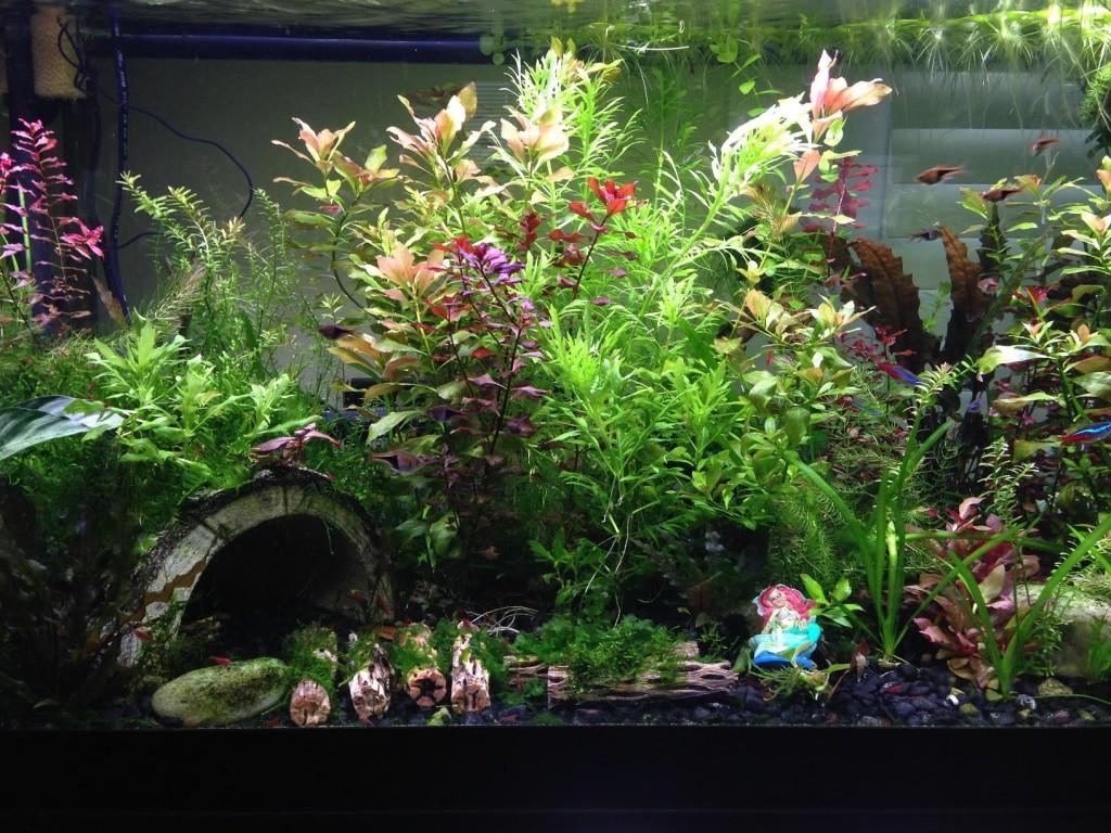 Live Plant Aquarium for Beginners