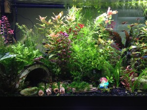 Live Plant Aquarium for Beginners
