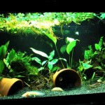Live Plant Aquarium Lighting