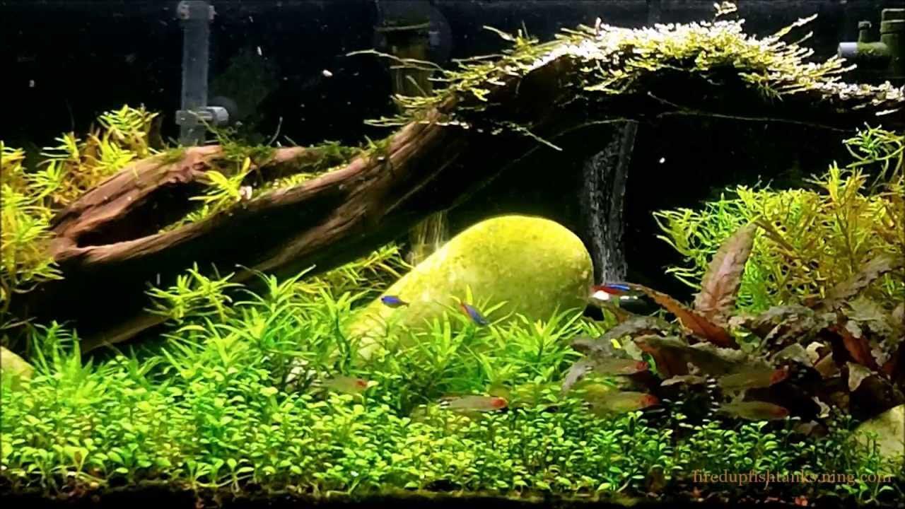 Live Plant Aquarium Setup