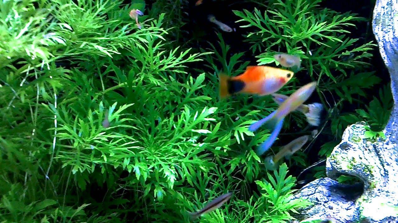 Live Plant Aquarium Substrate