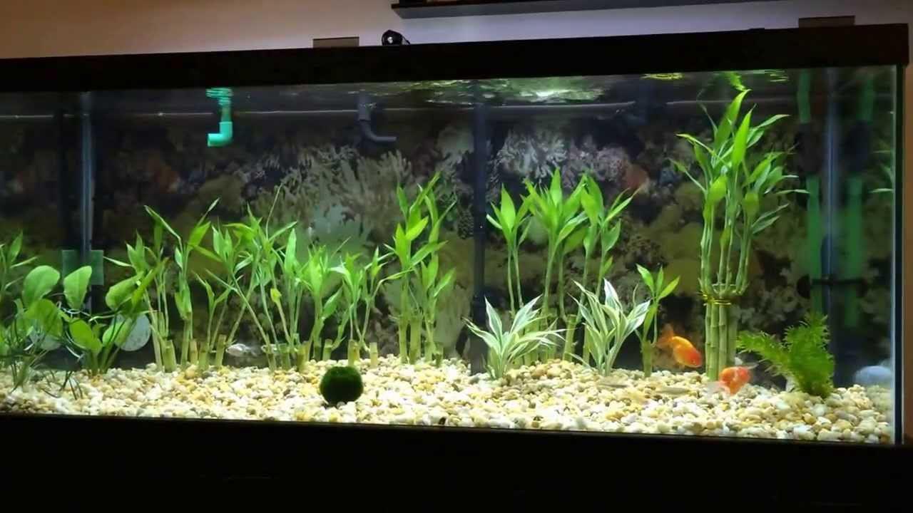Live Plant in Aquarium