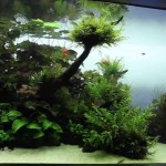 Live Planted Aquarium Design