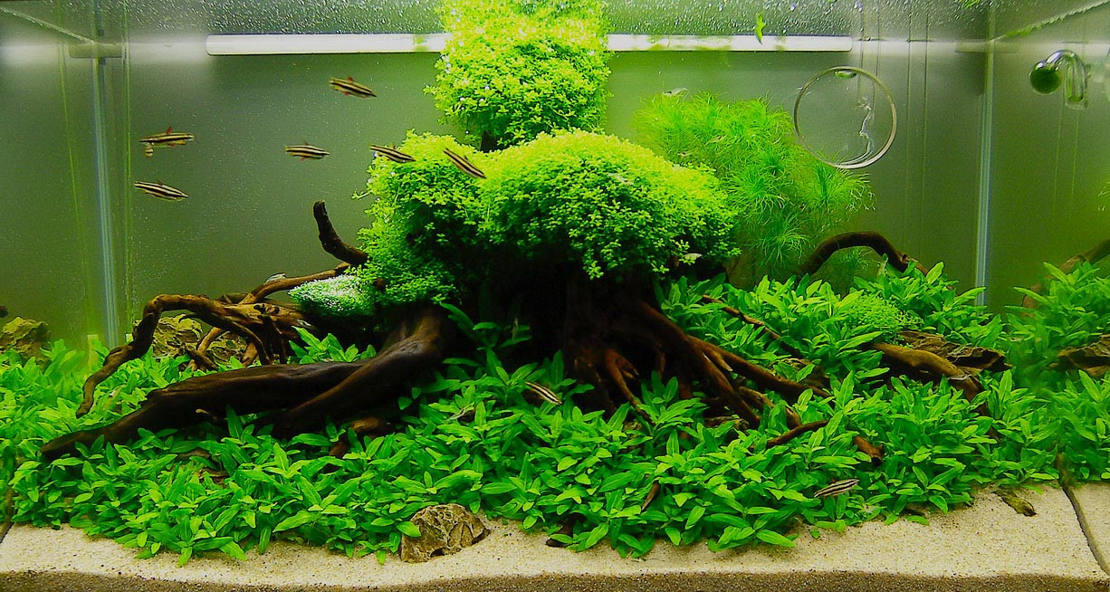 Live Plants Aquarium Beginner