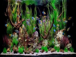 Live Plants Freshwater Aquarium
