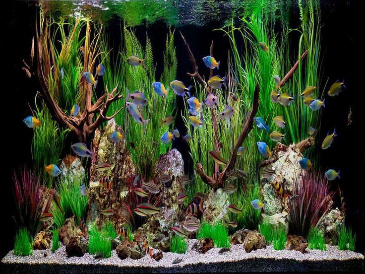 live plants freshwater aquarium - Freshwater Aquarium Design Ideas