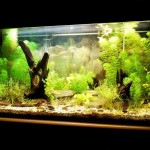Live Plants Tropical Aquarium