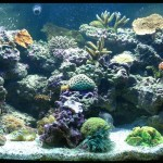 Live Saltwater Aquarium Plants
