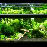 Live Water Plants for Aquarium