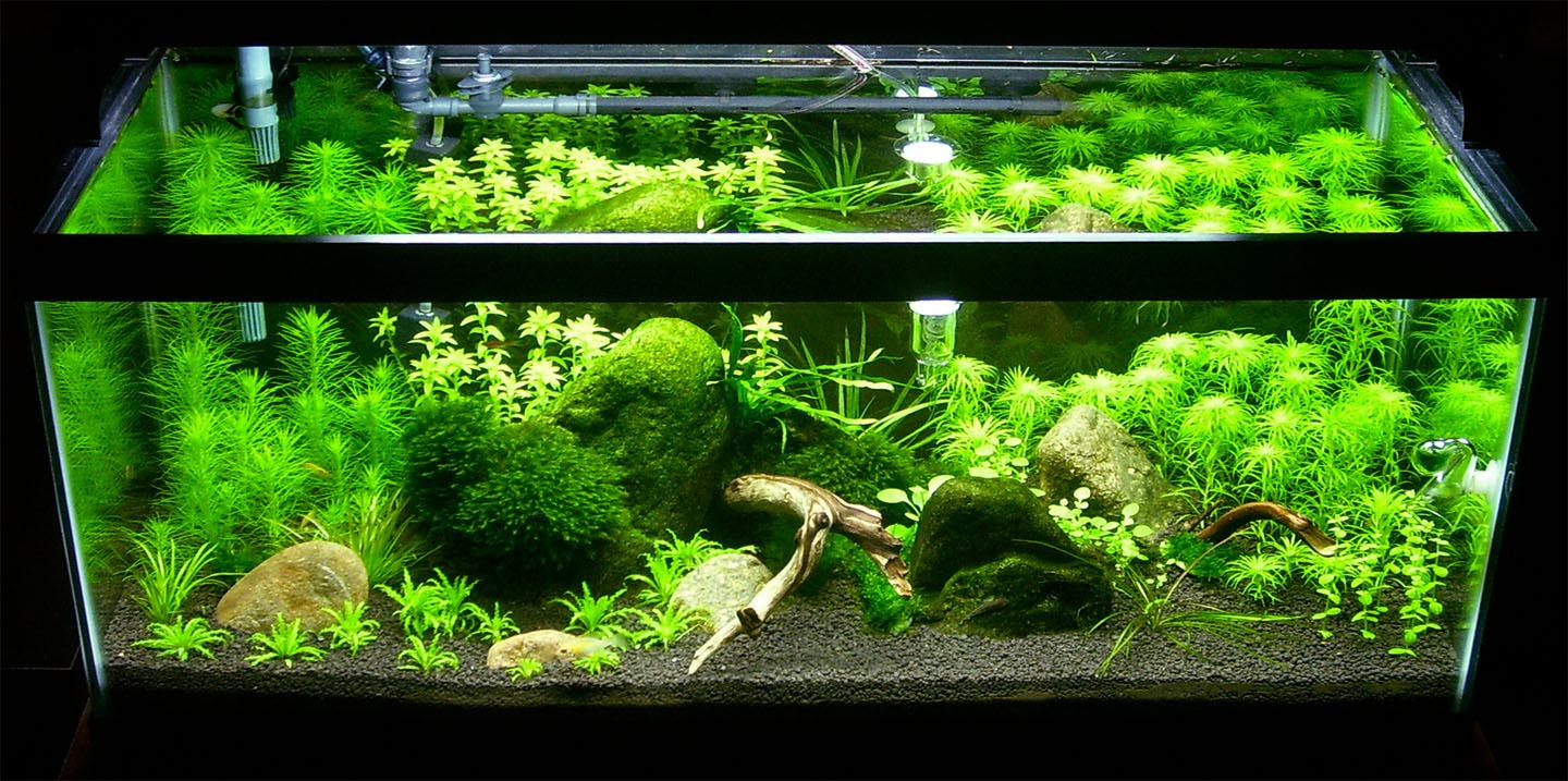 best aquarium fish live - photo #18