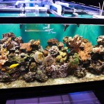 Looking After Salt Water Aquariums