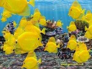 Marine Aquarium 3d Fish Tank