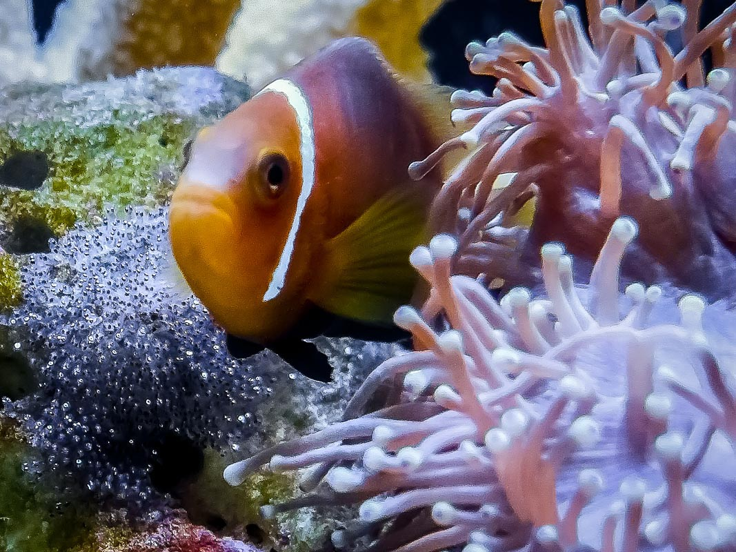Marine Aquarium Fish Database