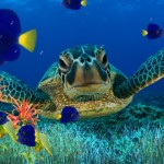 Marine Aquarium Fish Free Download