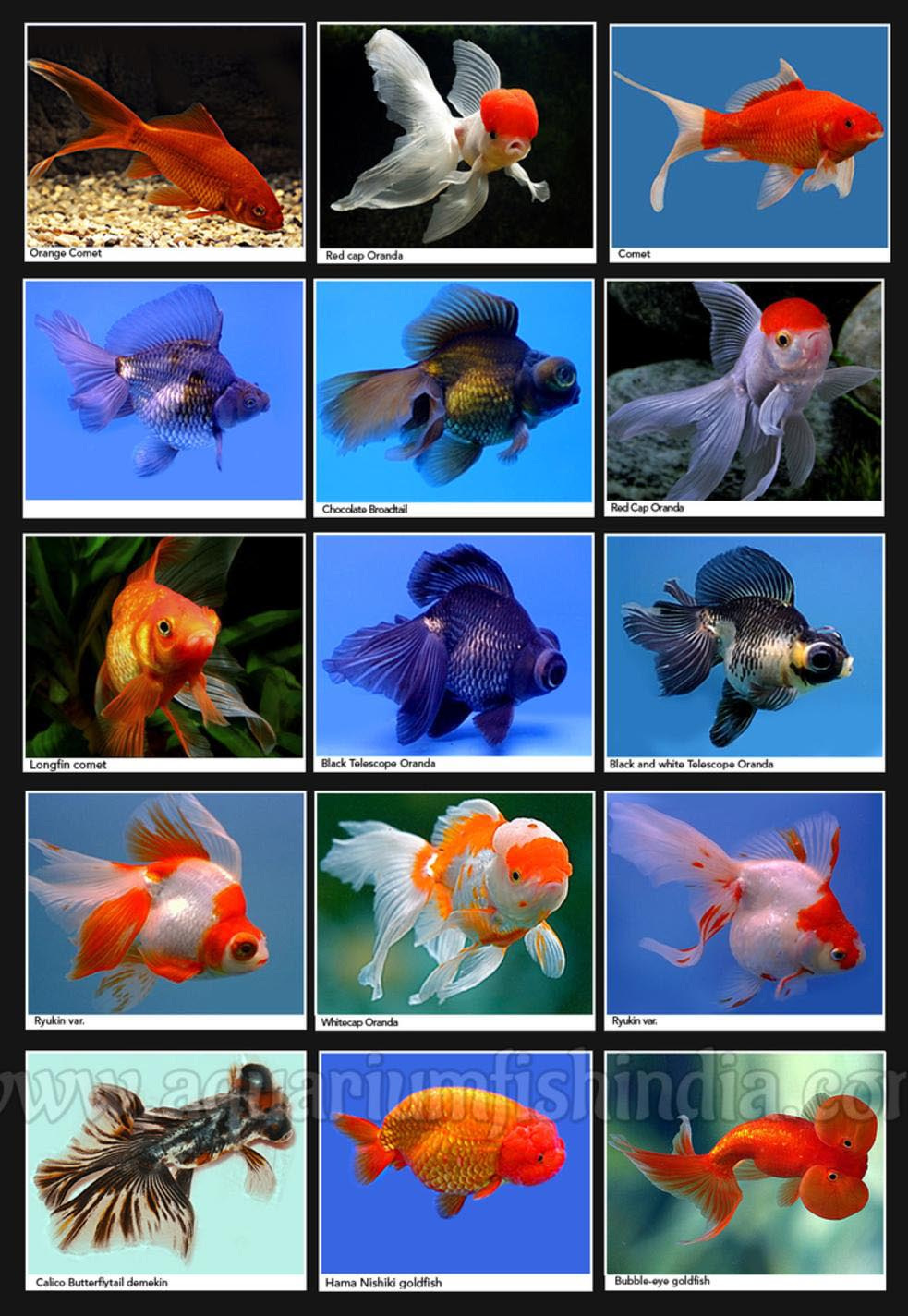 Marine aquarium fish identification aquarium design ideas for Pet koi fish tank