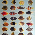 Marine Aquarium Fish List