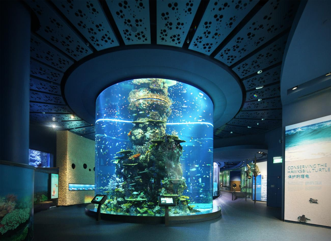Marine aquarium fish singapore aquarium design ideas for Aquarium design